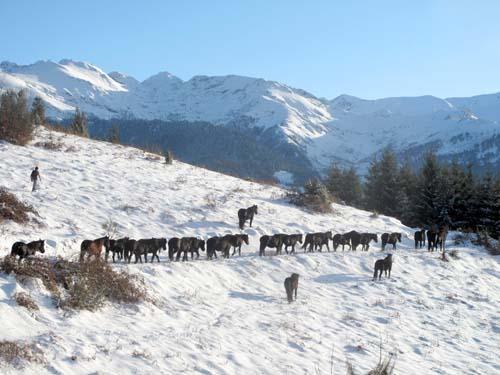 merens-neige-troupeau