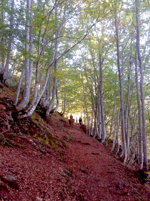 pyrenees_secrete